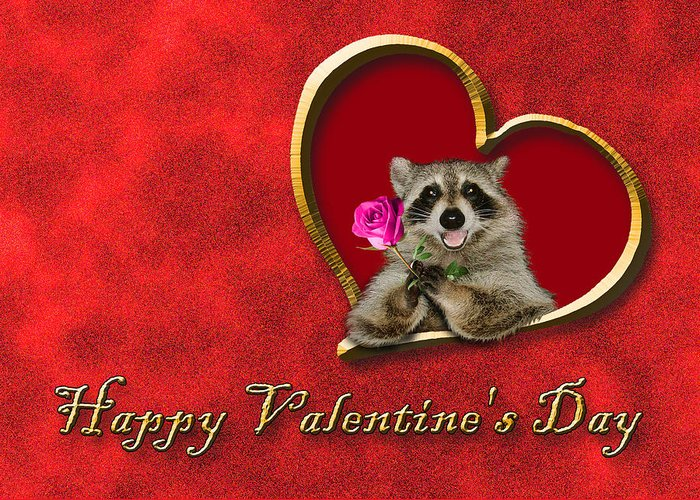 Happy Valentine's Day Greeting Card featuring the photograph Valentine's Day Raccoon by Jeanette K