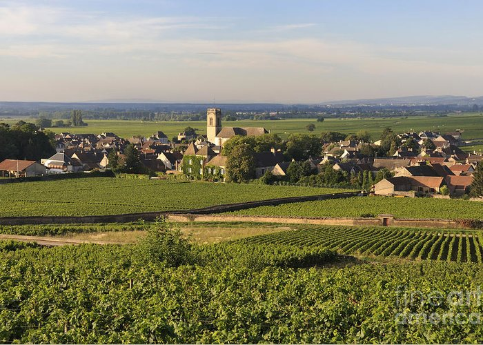 Agriculture Greeting Card featuring the photograph Vineyard And Village Of Pommard. Cote D'or. Route Des Grands Crus. Burgundy. France. Europe by Bernard Jaubert