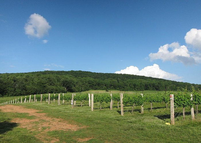 Virginia Greeting Card featuring the photograph Vineyards In Va - 12127 by DC Photographer