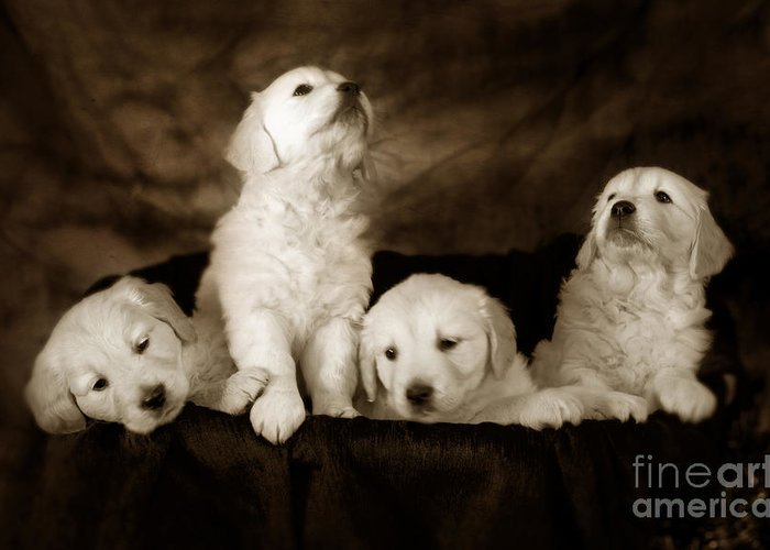 Dog Greeting Card featuring the photograph Vintage Festive Puppies by Angel Ciesniarska
