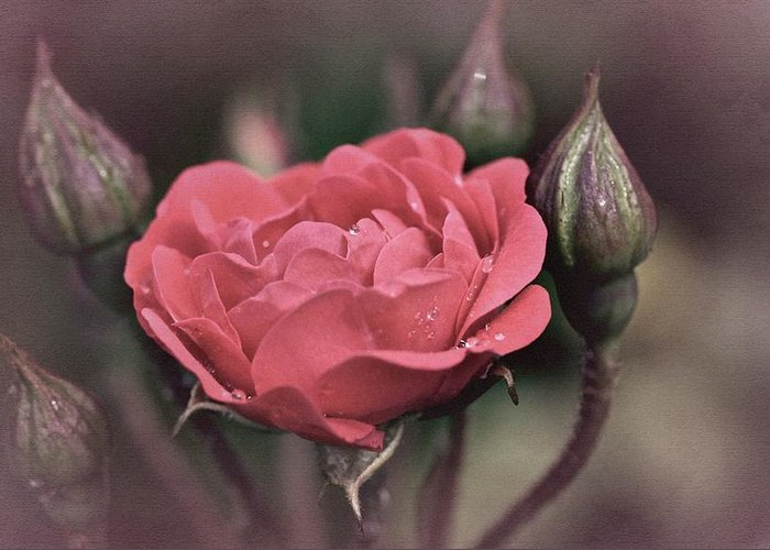 Rose Greeting Card featuring the photograph Vintage Rose No. 4 by Richard Cummings