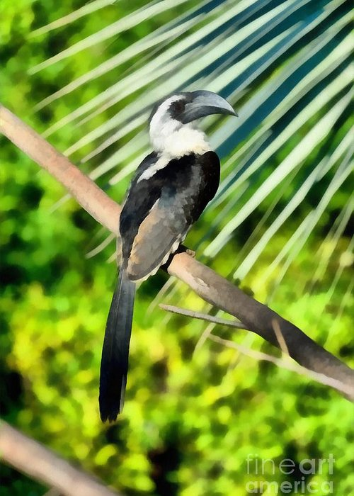 Hornbill Greeting Cards
