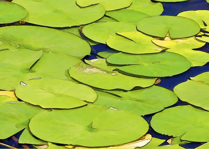 Detail Greeting Card featuring the photograph Water Lilly by David Letts