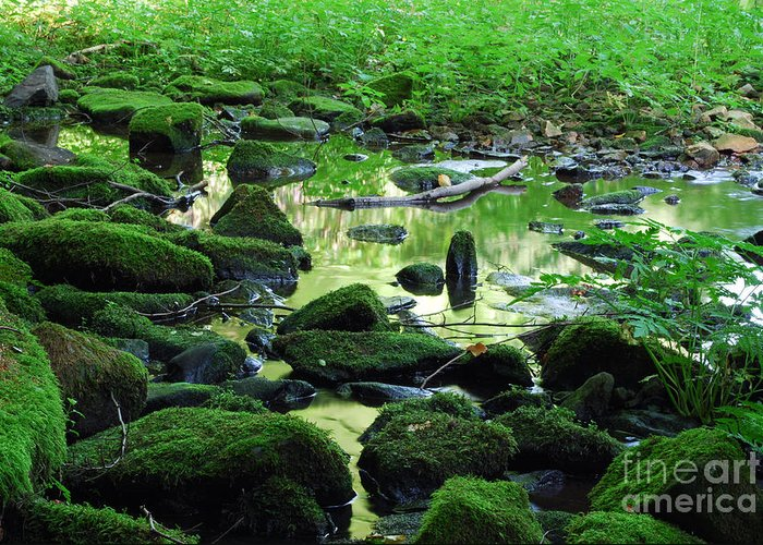 Water Greeting Card featuring the photograph Water by Sarka Olehlova