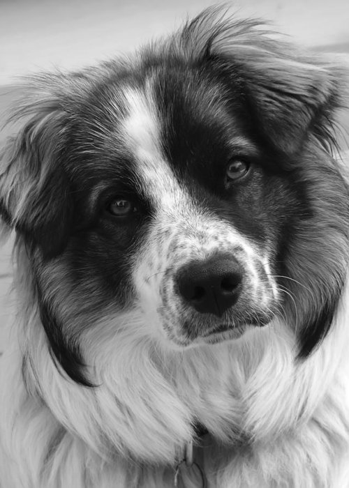 Black And White Greeting Card featuring the photograph What'cha Doin' by Rhonda McDougall