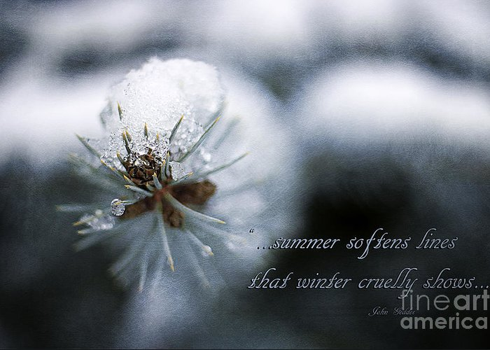Background Greeting Card featuring the photograph Winter by Darren Fisher
