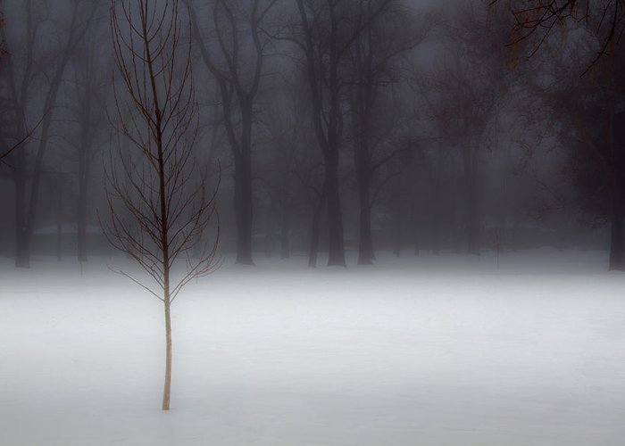 Winter Greeting Card featuring the photograph Winter In The Park by Utah Images