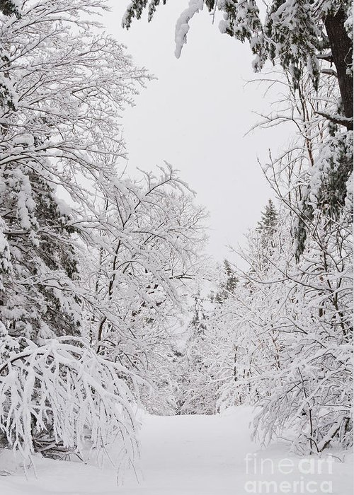 Greeting Card featuring the photograph Winter Road by Cheryl Baxter