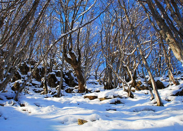 Winter Greeting Card featuring the photograph Winter's Tale by Stefan Dinov