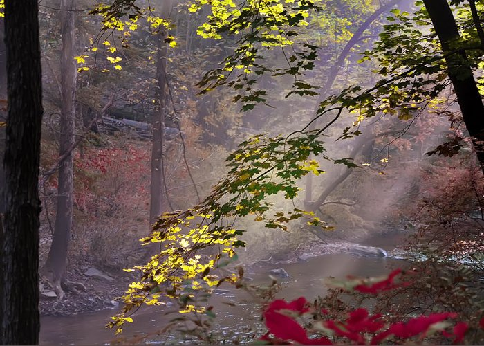 Wissahickon Greeting Card featuring the photograph Wissahickon Autumn by Bill Cannon