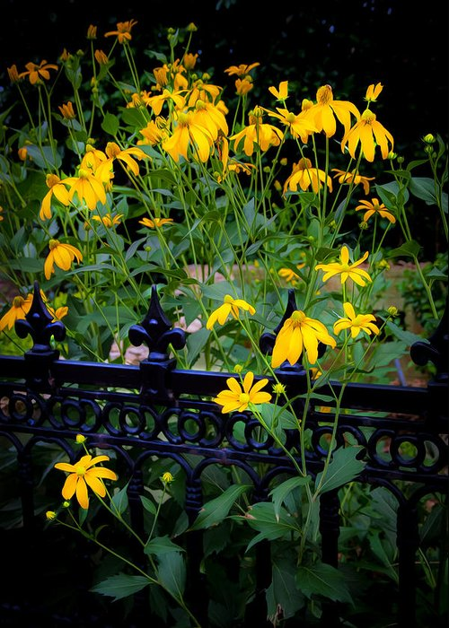 Echinacea Greeting Card featuring the photograph Yellow Coneflowers Echinacea Wrought Iron Gate by Rich Franco
