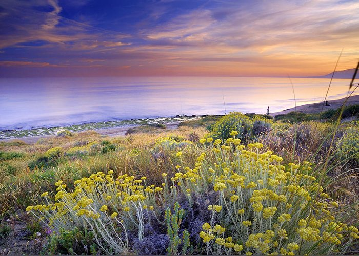 Seascape Greeting Card featuring the photograph Yellow Flowers At The Sea by Guido Montanes Castillo