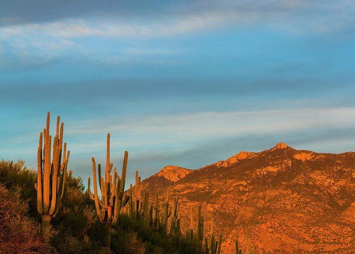 Catalina Mountains Greeting Cards