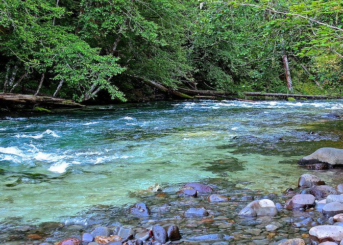 Salmon Greeting Card featuring the photograph Salmon Creek by Tim Rice