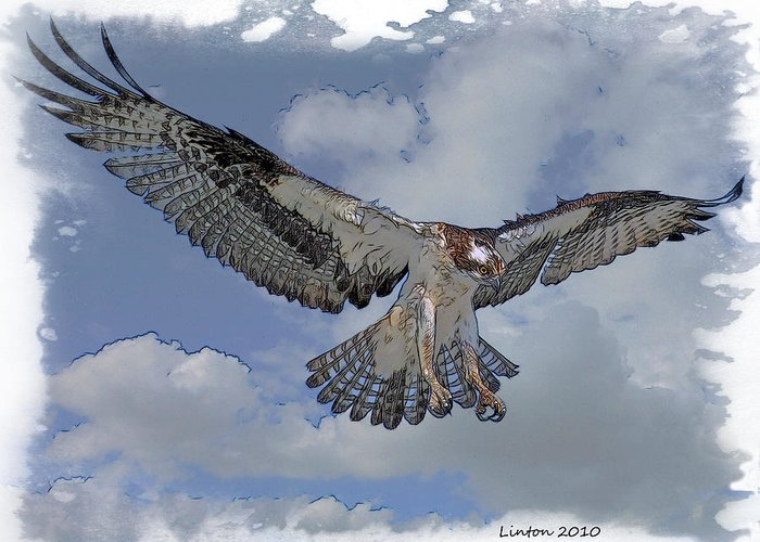 Osprey Greeting Card featuring the digital art Osprey Flight by Larry Linton