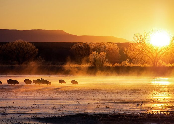 America Greeting Card featuring the photograph Usa, New Mexico, Bosque Del Apache by Terry Eggers