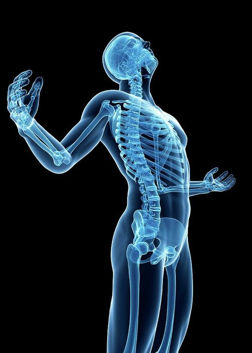 Artwork Greeting Card featuring the photograph Human Skeletal System by Sebastian Kaulitzki
