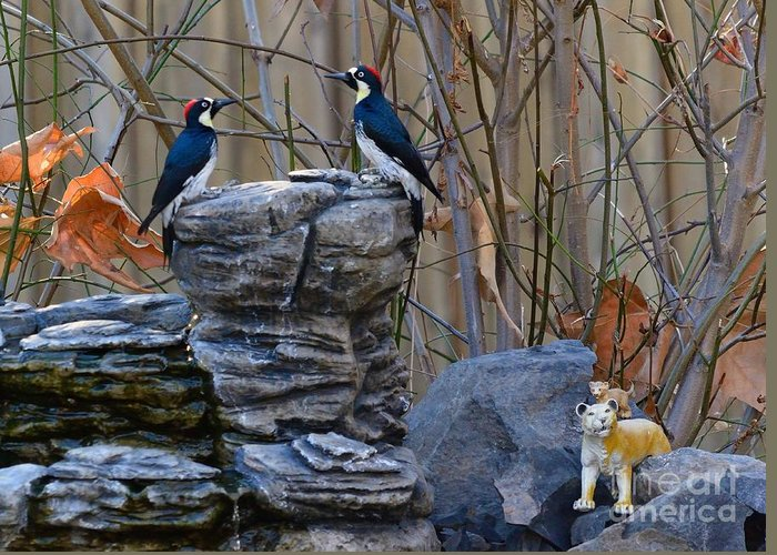 Birds Greeting Card featuring the photograph Birds by Marc Bittan