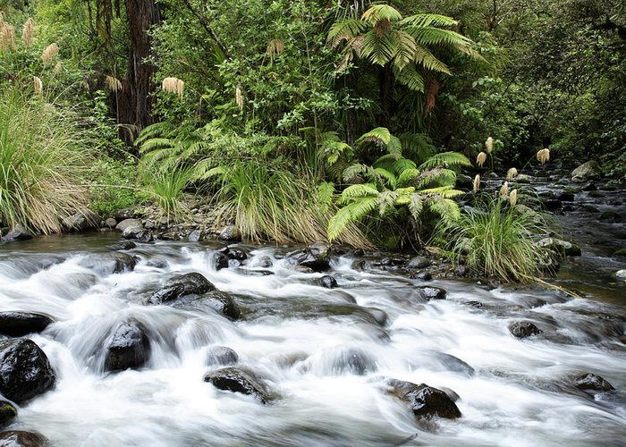 Water Greeting Card featuring the photograph Stream by Les Cunliffe