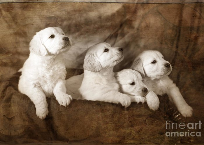 Dog Greeting Card featuring the photograph Vintage Festive Puppies by Angel Tarantella