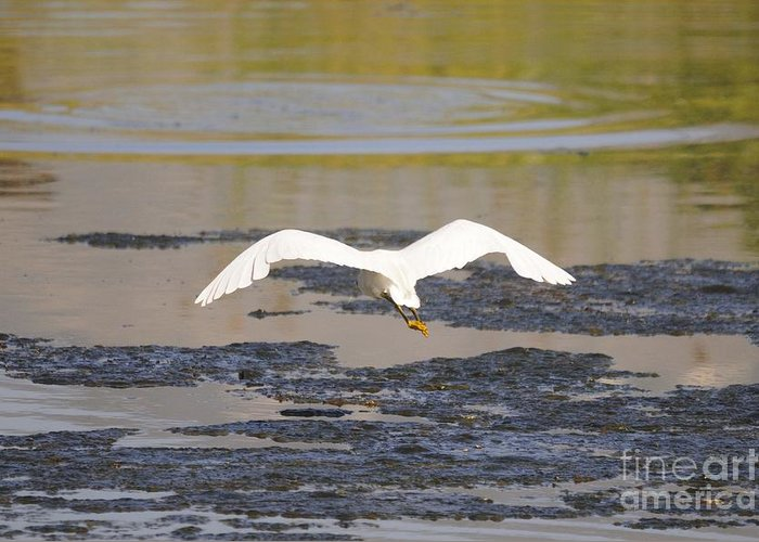 Egret Greeting Card featuring the photograph Egret by Marc Bittan