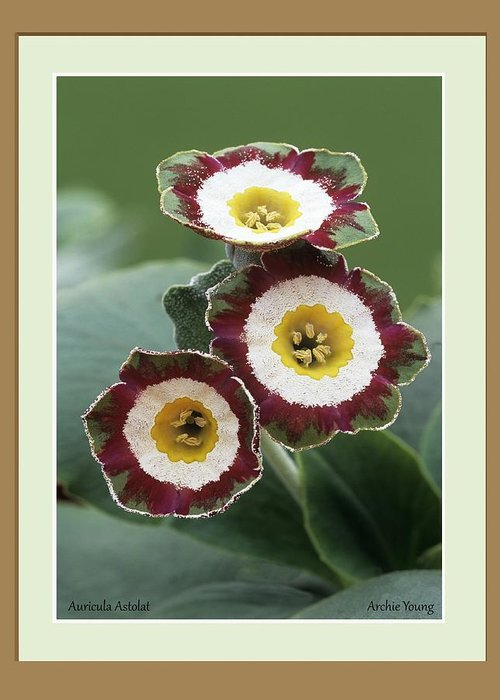 Greeting Card featuring the photograph Untitled by Science Photo Library