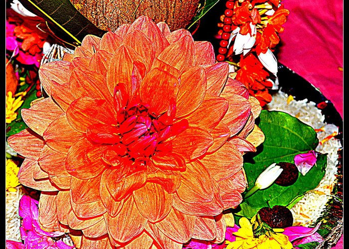 Flowers Flowers And Flowers Greeting Card featuring the photograph Flowers Flowers And Flowers by Anand Swaroop Manchiraju