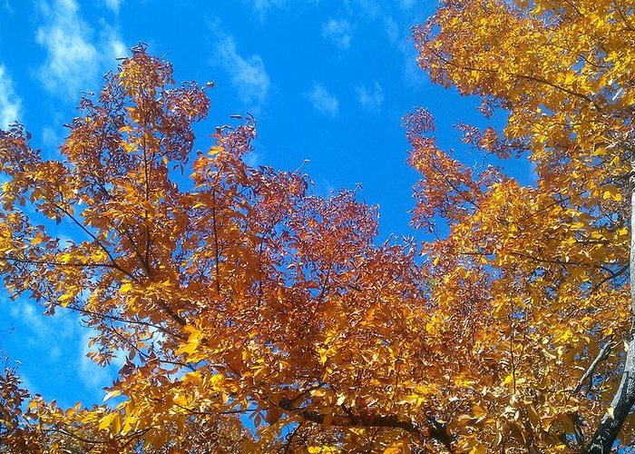 Fall Greeting Card featuring the photograph Autumn Color by Kenny Glover