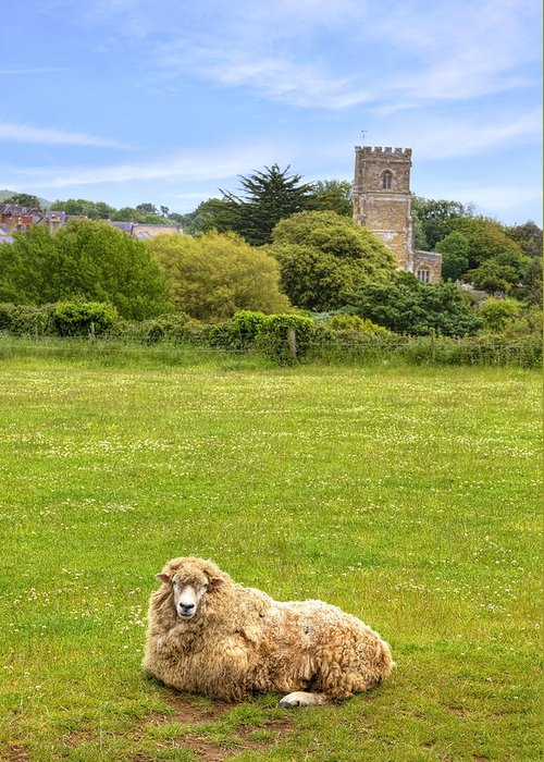 Sheep Greeting Card featuring the photograph Abbotsbury by Joana Kruse