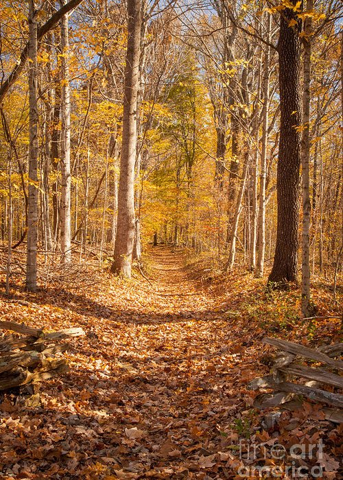 America Greeting Card featuring the photograph Autumn Trail by Brian Jannsen