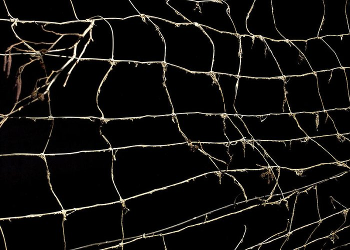 Outdoors Greeting Card featuring the photograph Barbed Wire by Bernard Jaubert