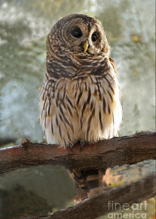 Bird Greeting Card featuring the photograph Barred Owl by Dennis Hammer