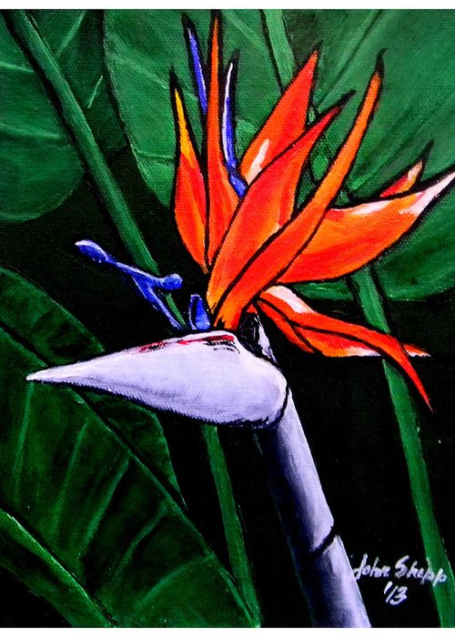 Bird Of Paradise Greeting Card featuring the painting Bird Of Paradise by John Shipp
