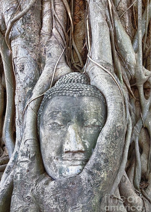 Angkor Greeting Card featuring the photograph Buddha Head In Tree by Fototrav Print