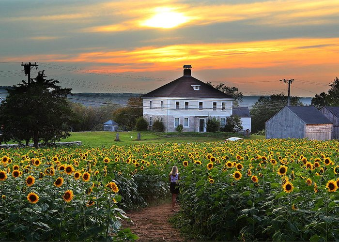 Farm Greeting Card featuring the photograph Buttonwood Farm by Andrea Galiffi