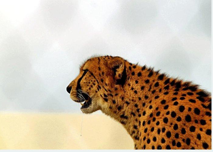 Cheetah Greeting Card featuring the photograph Cheetah by James Stough