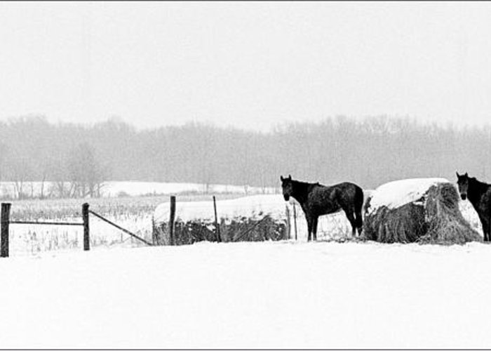 Kentucky Landscape Greeting Card featuring the photograph Cold Stare by Wendell Thompson