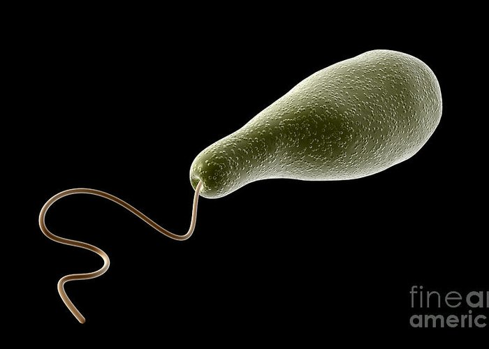 Color Image Greeting Card featuring the digital art Conceptual Image Of Euglena by Stocktrek Images