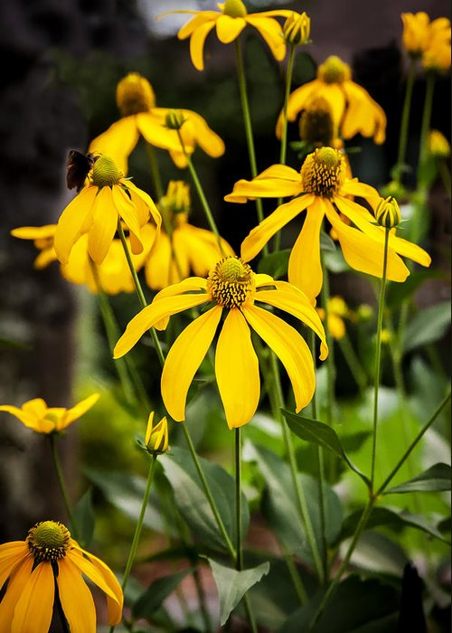 Echinacea Greeting Card featuring the photograph Coneflowers Echinacea Yellow Painted by Rich Franco