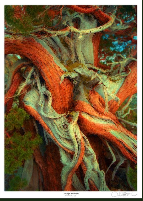 Tree Lines Mixed Media Greeting Cards