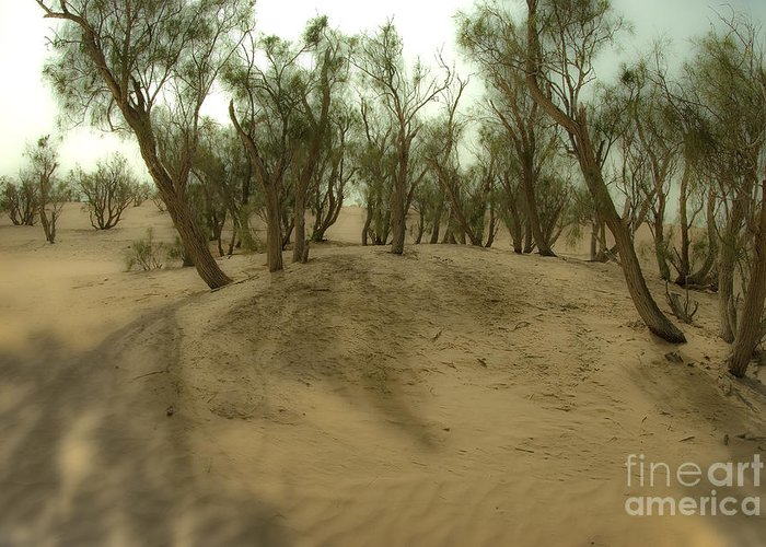 Tamarix Greeting Card featuring the photograph Desert Tamarix Trees by Dan Yeger
