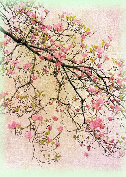 Pink Flower Branch Digital Art Greeting Cards