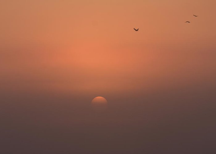 Sunrise Greeting Card featuring the photograph Early Birds by Jonny Rushton