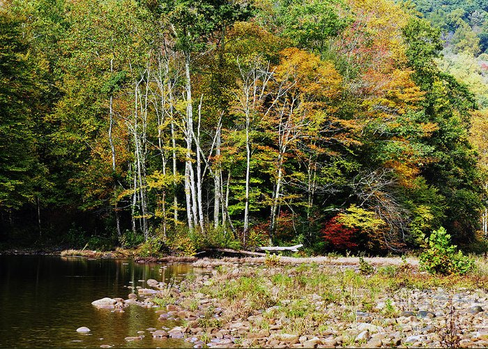 Autumn Greeting Card featuring the photograph Fall Color River by Thomas R Fletcher