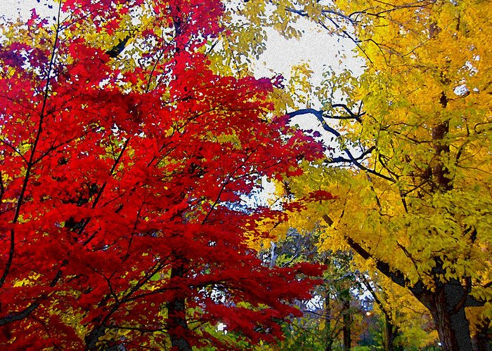 Autumn Greeting Card featuring the photograph Fall Leaves by Ariane Moshayedi
