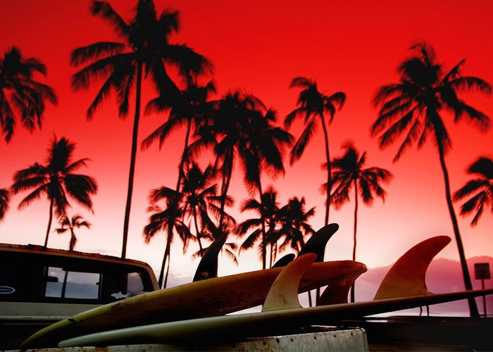 Red Sky Greeting Card featuring the photograph Fins N' Palms by Sean Davey