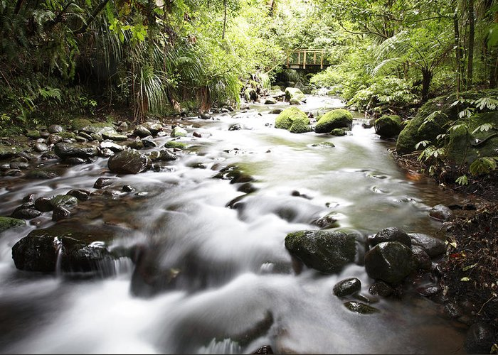 Water Greeting Card featuring the photograph Forest Stream by Les Cunliffe