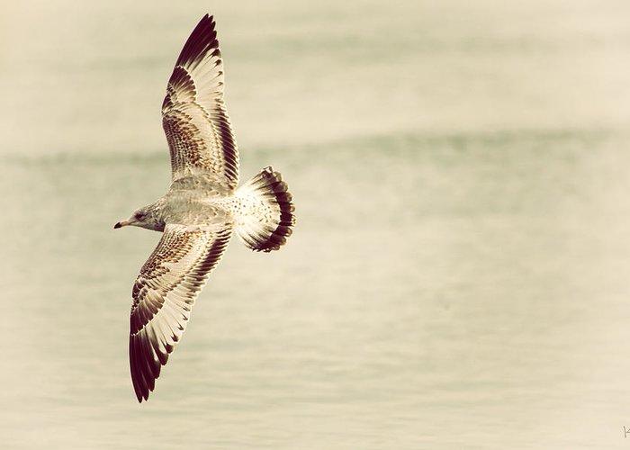Herring Gull Greeting Card featuring the photograph Herring Gull In Flight by Karol Livote