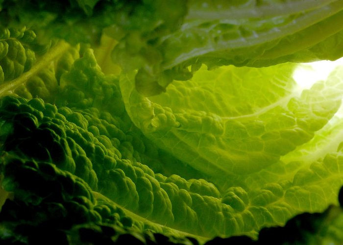 Lettuce Greeting Card featuring the photograph Inside A Lettuce Leaf by Linda Mcfarland