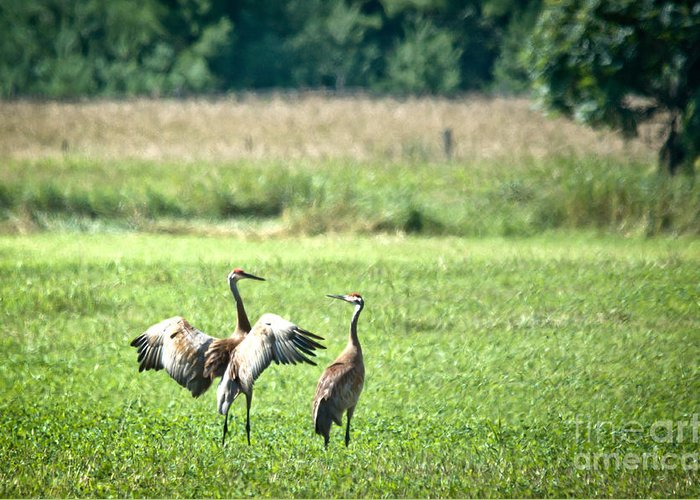 Sandhill Cranes Greeting Card featuring the photograph It Was This Big by Cheryl Baxter